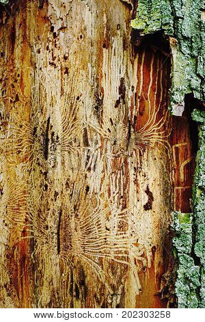 Pattern on the a surface of tree