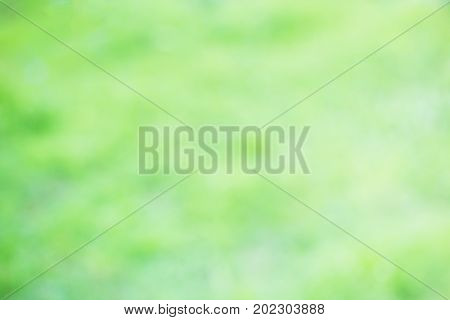Beauty Nature Bokeh. Abstract background beautiful greenyellow or colorful bokeh blur background and texture with morning sunlight. copy space for any design. Spring summer natural blurred background