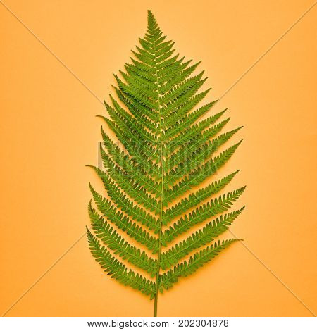 Fall Leaves Background. Fall Fashion Design. Art Gallery. Minimal. Green Fern Leaf. Pastel Colors. Autumn Concept