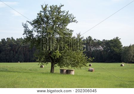 A lone tree in the middle of a meadow and below it are hay bales.
