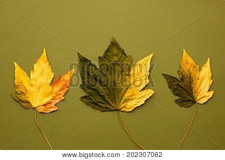 Fall Fashion Design. Art Gallery. Minimal. Fall Leaves Background. Yellow Green Maple Leaves. Trendy fashion Stylish Concept. Autumn Vintage