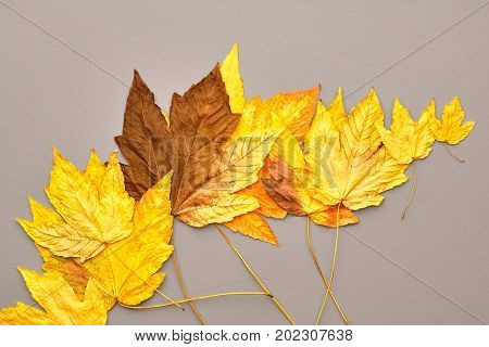 Autumn Fashion Fall Leaves Background. Vintage. Design. Yellow Fall Leaves on Gray. Trendy fashion Stylish Concept. Autumn Vintage