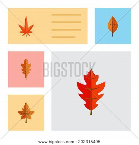 Flat Icon Foliage Set Of Aspen, Foliage, Alder And Other Vector Objects