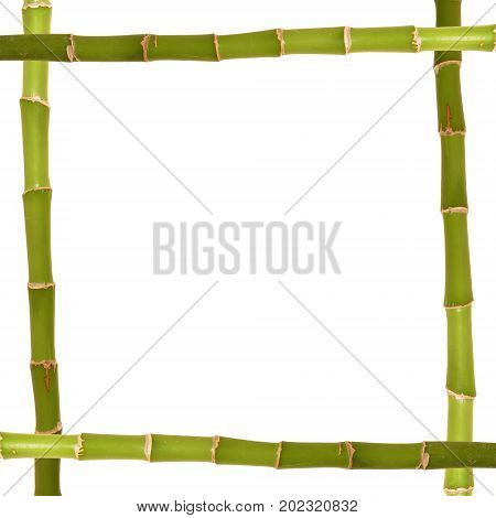Lucky bamboo frame isolated on white background