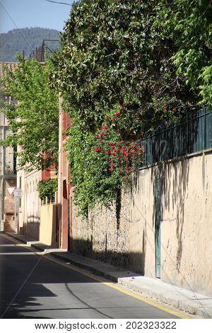 Sunny blossom street in La Garriga, Spain.