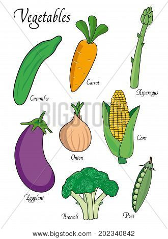 Vegetables set with cucumber, carrot, asparagus, eggplant, broccoli, onion, peas. Vector illustration isolated on white background. Vegetables vector object for for design, web, labels and advertising