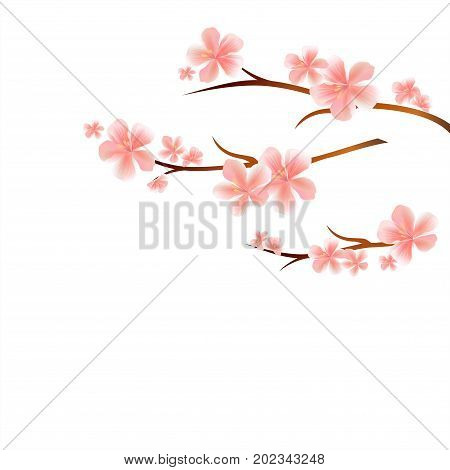 Branches of Sakura with Pink flowers isolated on White background. Sakura flowers. Cherry blossom. Vector EPS 10 cmyk