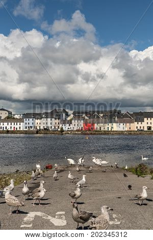 Galway Ireland - August 5 2017: Closeup of a section of the lIne of colorful houses of The Long Walk quay under enormous cloudscape in blue sky and with dark blue water of the port. Closeup of swans and seagulls up front.