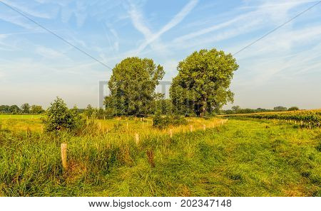 Rural landscape in the Netherlands with a blue sky with white contrails tall trees and many fences. Is is a windless and sunny day in the summer season.