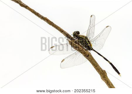 Dragonfly Perched On A Tree Branch
