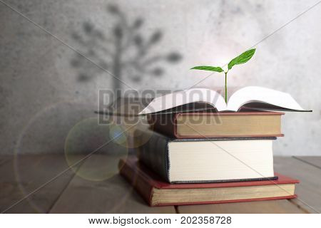 Open book with a new seedling growth and the shadow of a tree