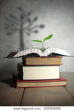 Open book with a new growing plant and the shadow of a tree