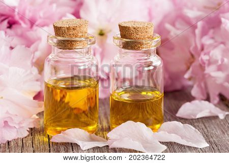 Two bottles of essential oil with pink kwanzan cherry blossoms in the background