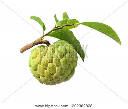 Fresh Custard Apple with leaf isolated on white background
