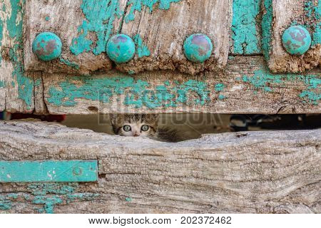 Front view of kitty through old wooden door hole