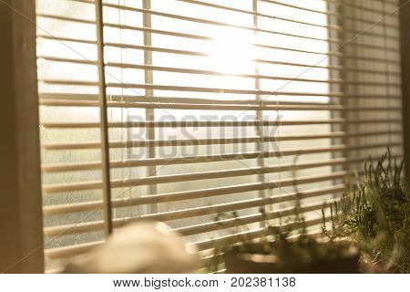 Opened blinds with sunlight coming in through window. Plants nearby.