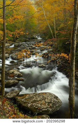 The middle prong of the Little Pigeon River in Tremont of Great Smoky Mountains National Park in autumn of the year.