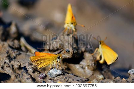 Insect present group an animal from butterfly, dragonflies, and other invertebrate