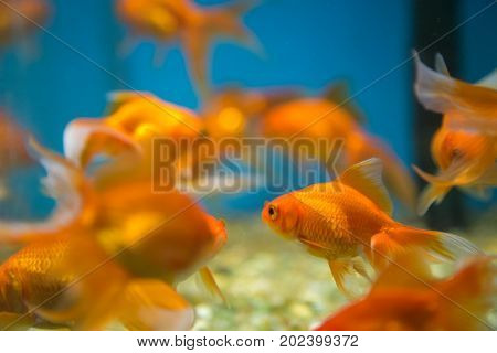 Fish Aquatic Ornament Tank Relaxation