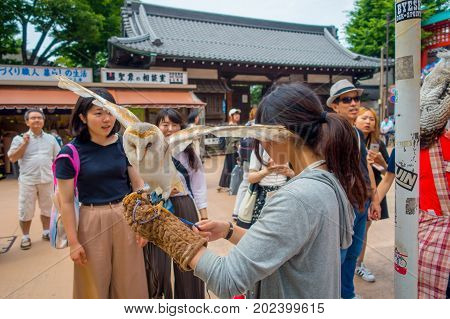 TOKYO, JAPAN JUNE 28 - 2017: Beautiful owl posing over a woman wrist in the street in Akihabara owl cafe - owls are very popular pets in Japan.
