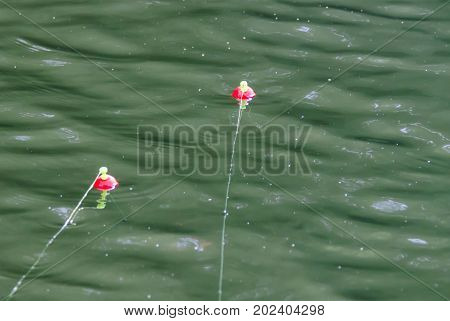 Two fishing bobbers floating in lake river water.  Relax and enjoy fun leisure sporting activity of fishing.