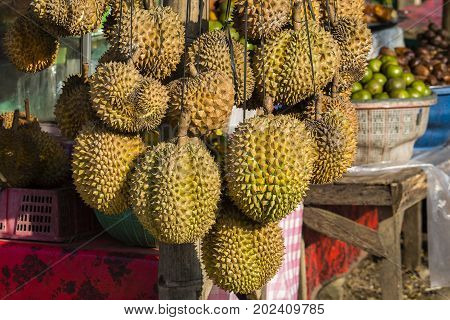 King of fruits durian in the fruit market close up. Island Bali Indonesia Ubud