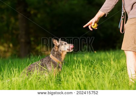 Person Plays With An Australian Cattledog