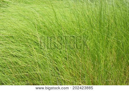 The freshness of green grass Natural texture background