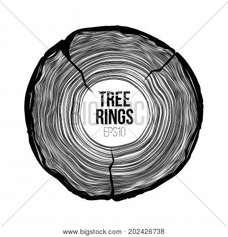 Vector tree rings slice with crack. Annual life texture. Woodgrain pattern backround