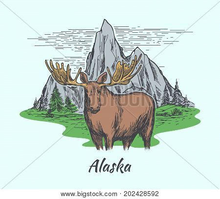 Alaska poster. Moose, fir forest and mountains. Hand drawn style. Vector illustration
