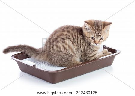 Funny Cat Kitten Sitting In A Cats Toilet Isolated On White