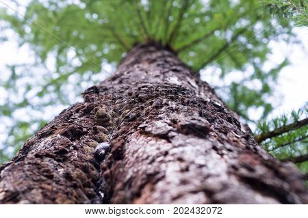 tree trunk with crown in the summer forest. nature background.