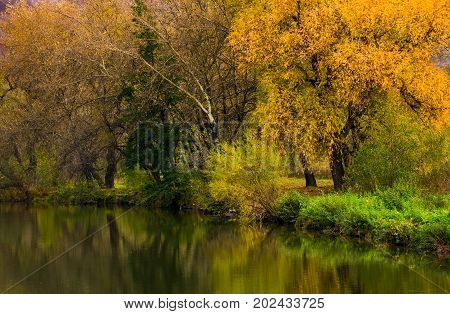 Forest With Yellow Foliage Near The River
