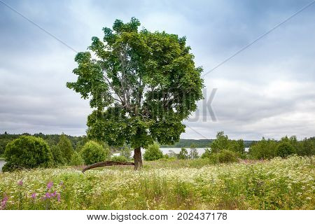 A lone tree in a green field with a blue sky in the background