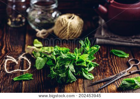 Bunch of Fresh Mint with Rusty Scissors. Tangle with Two Jars and Teapot on Backdrop.