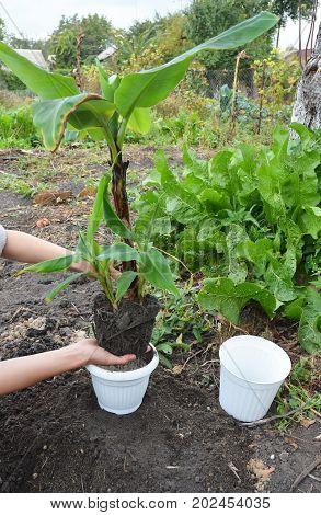 Transplant Flowers In Pots. Florist Transplant Flowers.