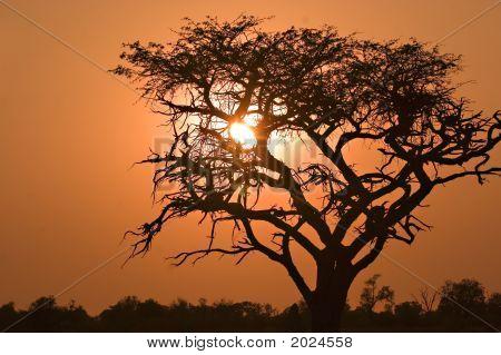Sunrise In Moremi