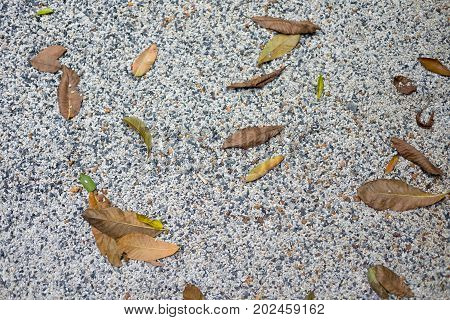 Dry leaf on stone ground nature background