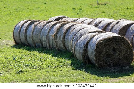 Bales Of Hay Rolled On The Freshly Harvested Field