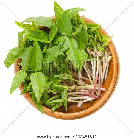 Mung bean microgreens in wooden bowl. Cotyledons of Vigna radiata, also called moong bean, green gram or mung. Young plants, seedlings and sprouts. Macro food photo close up from above over white.