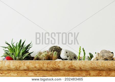 Succulent and cactus on a gray background. Copy space for your text. Houseplants background.