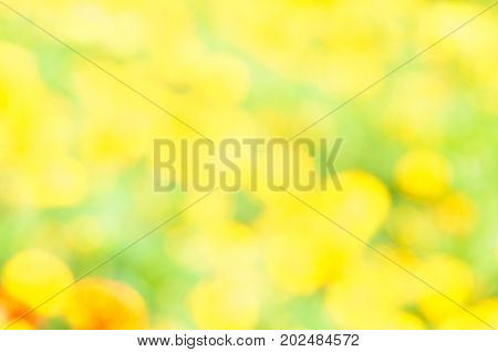 Natural yellow blurred background. Yellow bokeh on nature defocus abstract blur background. Abstract background in yellow and green tones. Natural outdoors bokeh background in green and yellow tones. Defocused bokeh lights. Blurred bokeh. Bokeh light vint