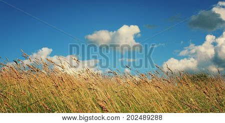 Grasses In The Field. Russia North Countryside.