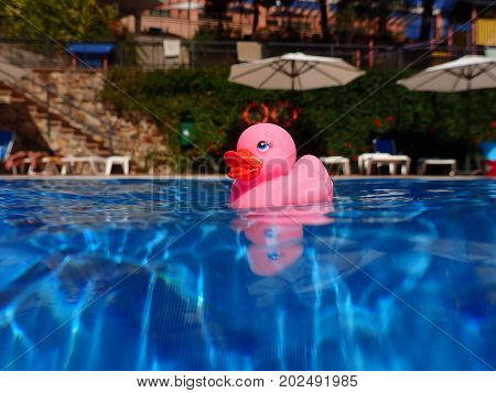Pink bath duck floating in swimming pool