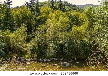 Derbent river with muddy water and stones flows among the trees in Lori region of Armenia