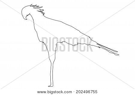 Outline of an african Secretary Bird  - digitally handdrawn illustration on white background