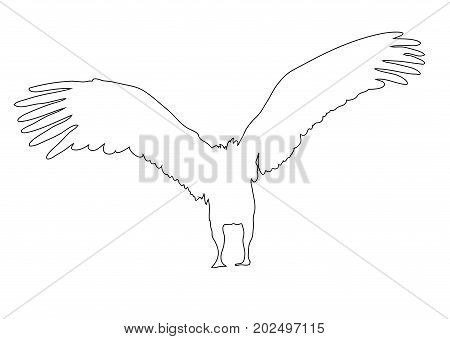Outline of an african Vulture - digitally handdrawn illustration on white background