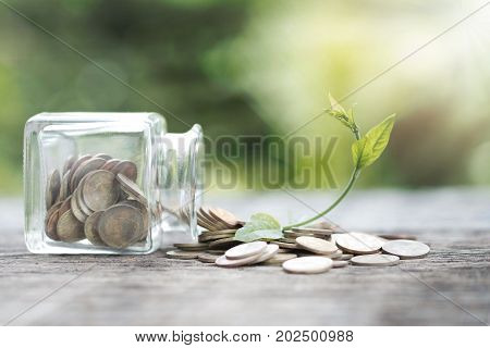 Bottles and coins and the plant that up the arch. Concept of way to economic recovery.