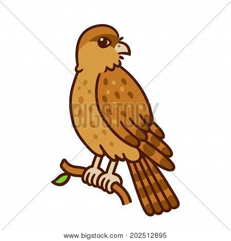 Cartoon drawing of Tiuque (Chimango caracara) wild bird native to South America. Cute native fauna vector illustration.