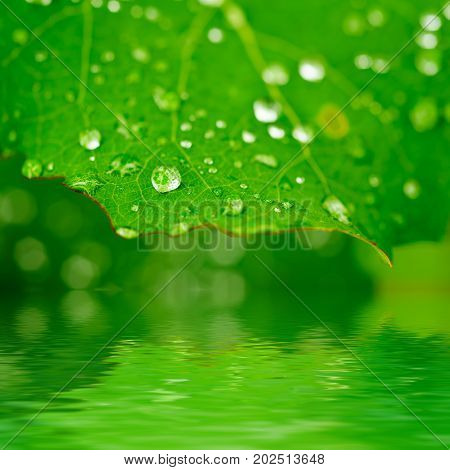 Green leaf with water drops and reflection, macro, nature background with copy space